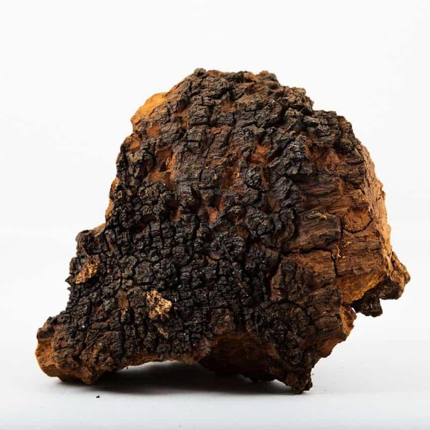 Die Qualität von Chaga-Pilzen beurteilen